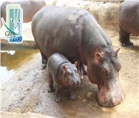 بعد وفاة «نعيمة».. مولود «سيد قشطة» يدخل الفرحة لحديقة الحيوان