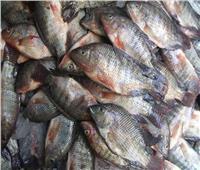 حقيقة إصابة «أسماك البلطي» بالميكروبات والديدان