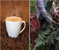صدمة لمحبي «القهوة».. تختفي 2080