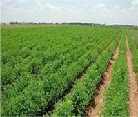 «الريف المصري» تناشد واضعي اليد بالطور سرعة «إحداثيات» الأراضي المنزرعة