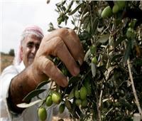 فلسطين: طرد الاحتلال للمزارعين من قريوت يهدف لتأسيس تجمع استيطاني بنابلس