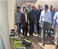 صور| محافظ جنوب سيناء يتفقد مزارع تجمع أبو غراقد للمنتجات