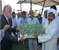 «فوده» يوزع شتلات خضراوات متنوعة مجانا على المواطنين