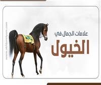 إنفوجراف| تعرف على علامات الجمال في الخيول
