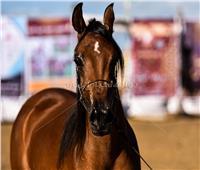 خاص| «الوقاية خير من العلاج».. كيف تستعد الخيول لفصل الشتاء؟