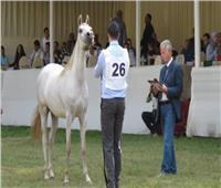 انطلاق فعاليات مهرجان الخيول العربية بمحطة الزهراء