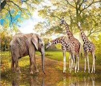 فيل و3 زرافات خطة حديقة الحيوان لتعويض «نعيمة وياسو وفوزية»