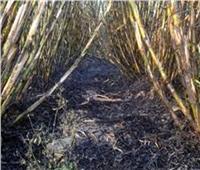 الحماية المدنية تسيطر على حريق بمزرعة قصب في المنيا
