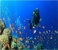 تعرف على «شروط» و« أماكن» تدريبات الغوص
