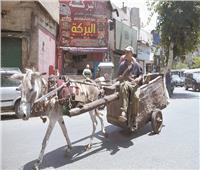 بين تعطيل المرور وتشويه الشوارع.. «الكارو» فوضى عكس الإتجاه