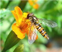 لحماية النحل.. «الآفات الزراعية» تقيّد استخدام مجموعة من المبيدات