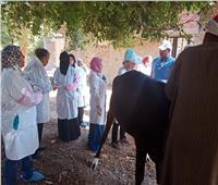 صور| «الزراعة» تواصل قوافلها البيطرية لحماية الثروة الحيوانية بأسوان