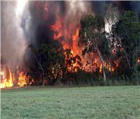 دخان حرائق الغابات الأسترالية يدفع سيدني لقائمة أكثر 10 مدن تلوثا
