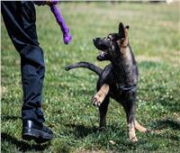 استنساخ 6 كلاب بوليسية للعمل بالشرطة في الصين