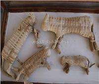 «وزيري» يعلن اكتشاف خبيئة للحيوانات المقدسة وتماثيل آلهة مصرية قديمة