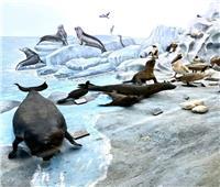 صور.. 10 معلومات عن «عروس البحر» تعرف عليها