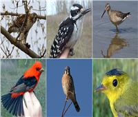 دراسة: تغير المناخ يؤثر على أحجام الطيور ويجعلها أصغر حجما