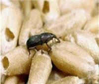 «وقاية النباتات» تنظم دورة للتدريب على مكافحة آفات الحبوب والمواد المخزنة