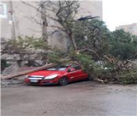 سقوط «غية حمام» وشجرة على سيارتين بالإسماعيلية