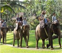أفيال تقتحم مطعما وتتناول وجبات الزبائن