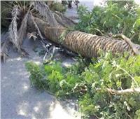 «بينهم طفل».. مصرع وإصابة 3 بسبب الطقس السيئ في العياط