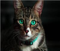 «قطة» تتسبب في تأخر موعد إقلاع طائرة