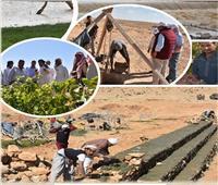 حصاد 2109| إنجازات مركز بحوث الصحراء.. أبرزها البحوث التطبيقية بمطروح