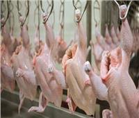 «الزراعة»: ذبح 7.5 مليون طائر داخل المجازر خلال شهر نوفمبر