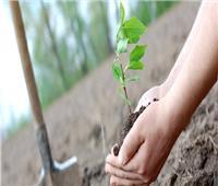 الوزراء ينشر فيديو إعادة استزراع الأشجار بمصر الجديدة