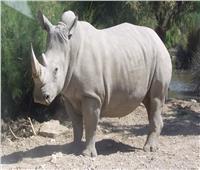 تراجع صيد وحيد القرن بناميبيا هذا العام بعد زيادة كبيرة العام الماضي