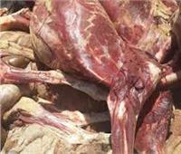 إعدام 717 كيلو جرام لحوم غير صالحةوتحرير 96 محضرا تموينا بسوهاج