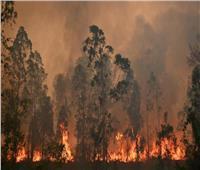 حرائق الغابات تصل إلى مستوى الطوارئ على أطراف سيدني الأسترالية