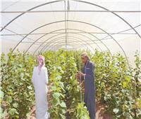 2020| جنوب سيناء.. منظومة خدمات متكاملة