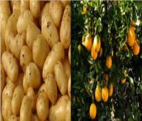 «البطاطس» و«الموالح» تتفوق.. ٥.٥ مليون طن إجمالي الصادرات الزراعية المصرية في ٢٠١٩