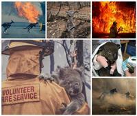 صور  تهدد أكثر من 100 مليار حيوان.. كوارث بيئية في انتظار العالم بسبب حرائق استراليا