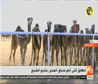 بث مباشر| انطلاق ثاني أيام سباق الهجن بشرم الشيخ