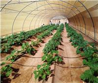 بالتفاصيل والصور.. «الزراعة» تعلن أعمال التنمية المتكاملة في وادي حوضين