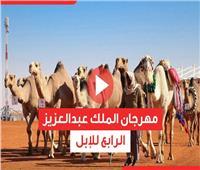 فيديوجراف | مهرجان الملك عبدالعزيز الرابع للإبل