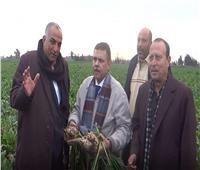 بالصور| استعدادات «الدلتا للسكر» لاستقبال محصول البنجر من المزارعين