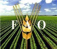 «الفاو» تؤكد على ضرورة تحويل النظم الغذائية لتحقيق أهداف التنمية المستدامة