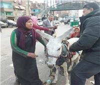 رد عاجل من محافظة القليوبية على واقعة «سيدة الكارو» الباكية.. ومفاجأت جديدة