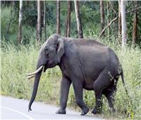 «فيل داخل فندق!».. ما هي حجم الخسائر ؟