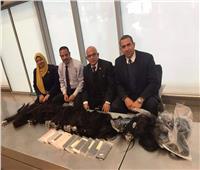 ضبط هواتف محمولة و«شعر مستعار» أثناء تهريبها بمطار القاهرة