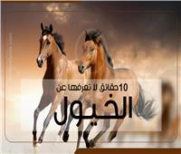 فيديوجراف| 10 حقائق لا تعرفها عن الخيول