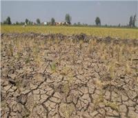 «أكساد» تنظم ورشة عمل التغيرات المناخية وتأثيرها على القطاع الزراعي