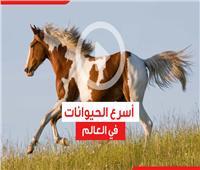 فيديوجراف| أسرع الحيوانات في العالم
