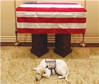 حكايات| كلاب لا ينساها البيت الأبيض.. أحدها أنقذ رئيساً أمريكياً من الموت