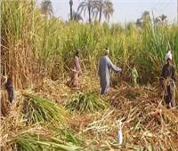 غدا.. صرف 90 % من مستحقات مزارعي القصب بنجع حمادي