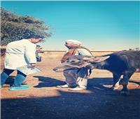 «الزراعة» تنظم قوافل بيطرية مجانية لصغار المُربين بسوهاج