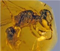99 مليون عام... العثور على أقدم نحلة في التاريخ